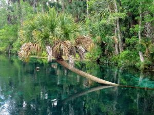 palm tree growing in water